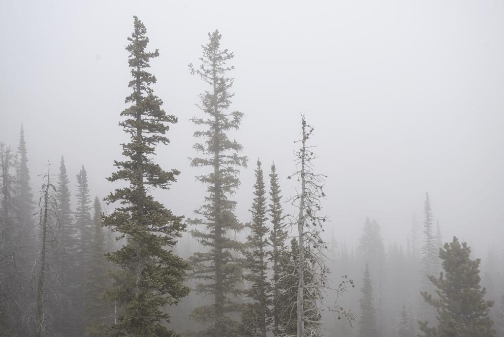 Fog near Bear Lake in Rocky Mountain National Park