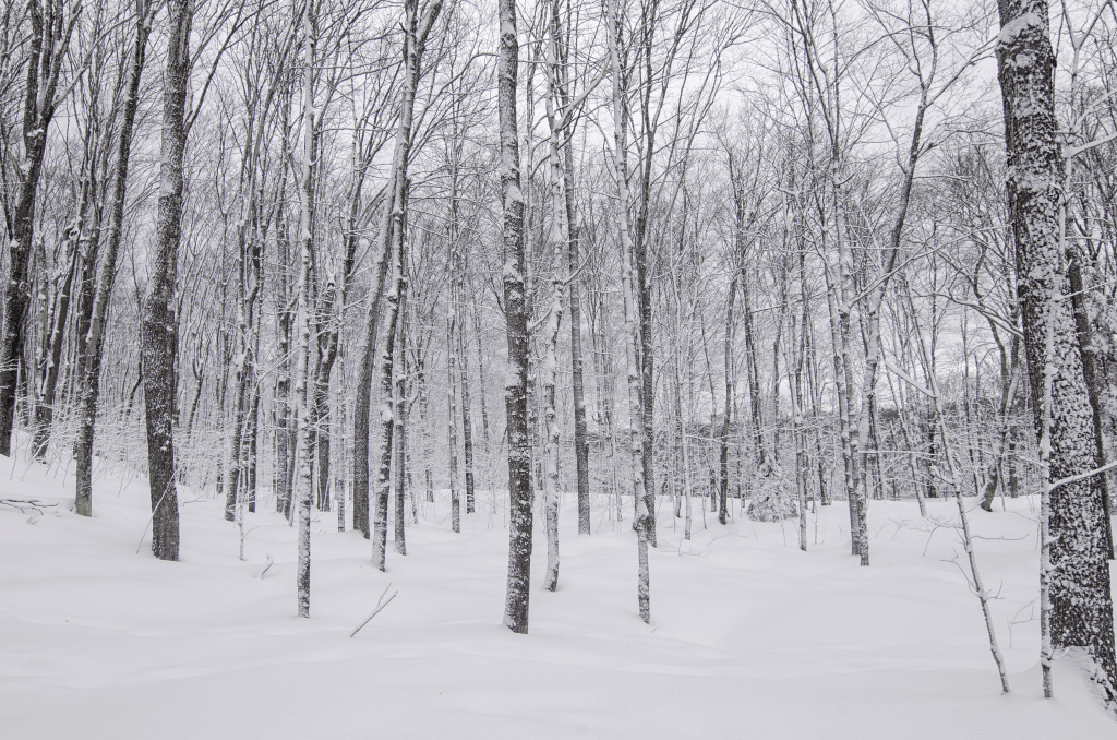 Winter in the Upper Peninsula